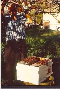 Arthur-bees-19
