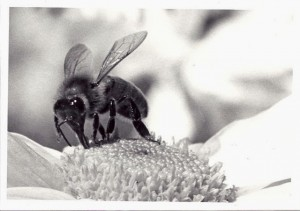 Arthur-bees-10