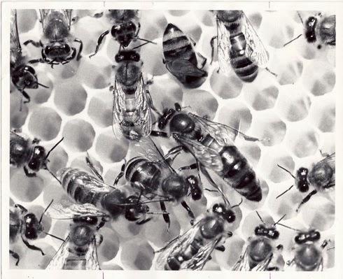 Arthur-bees-37