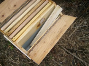 Barn hive feeder tray with float