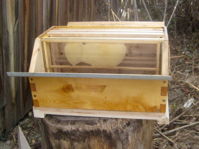 Barn hive observation window